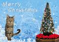 [猫][多頭飼い][里親募集][動物愛護][クリスマス][ツリー][カレンダー]【猫写真】はっぴぃ♪クリスマスにゃ!