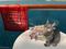 190401-【猫アニメ】クルーズに行ったにゃ!