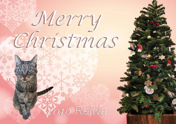 191224-【猫写真】令和最初のはっぴぃ♪クリスマスにゃ!