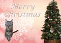 [猫][多頭飼い][里親募集][動物愛護][令和][新時代][クリスマス]191224-【猫写真】令和最初のはっぴぃ♪クリスマスにゃ!