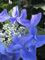 f:id:happier:20120602135038j:image:medium