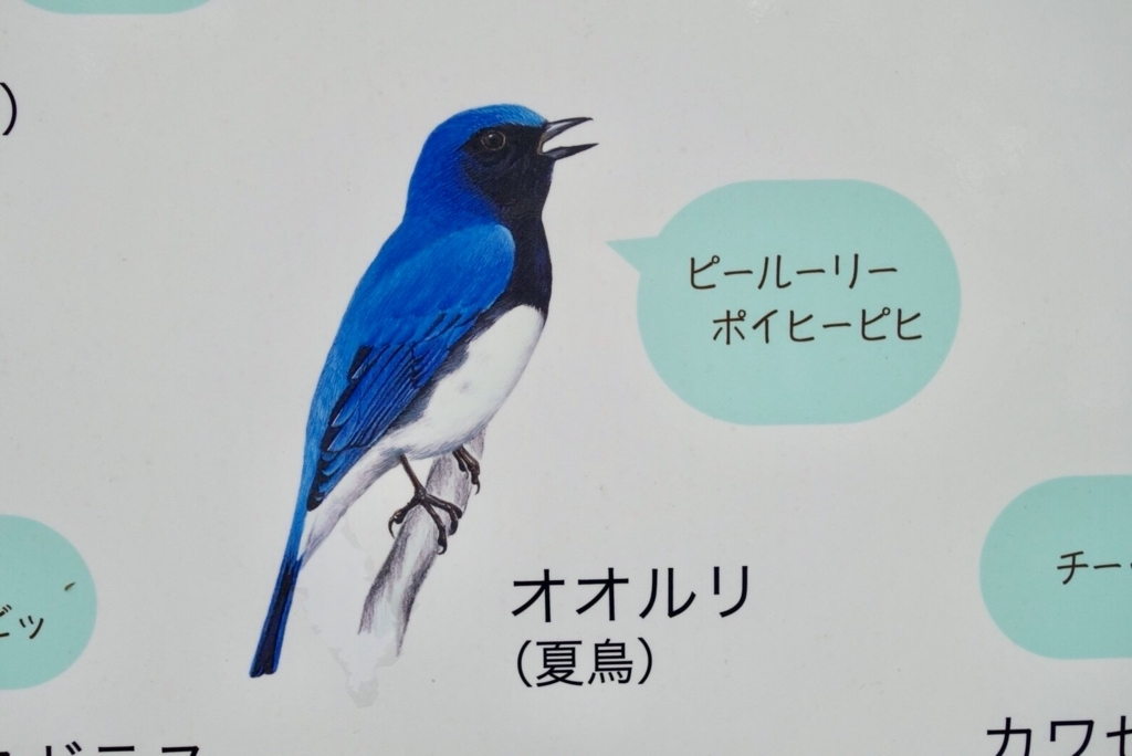 f:id:happonashi27:20180722214149j:plain