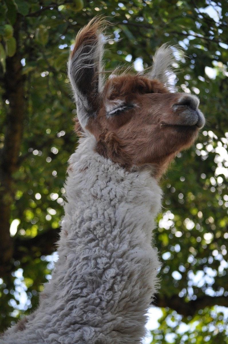 f:id:happy-alpaca:20191108180810j:plain