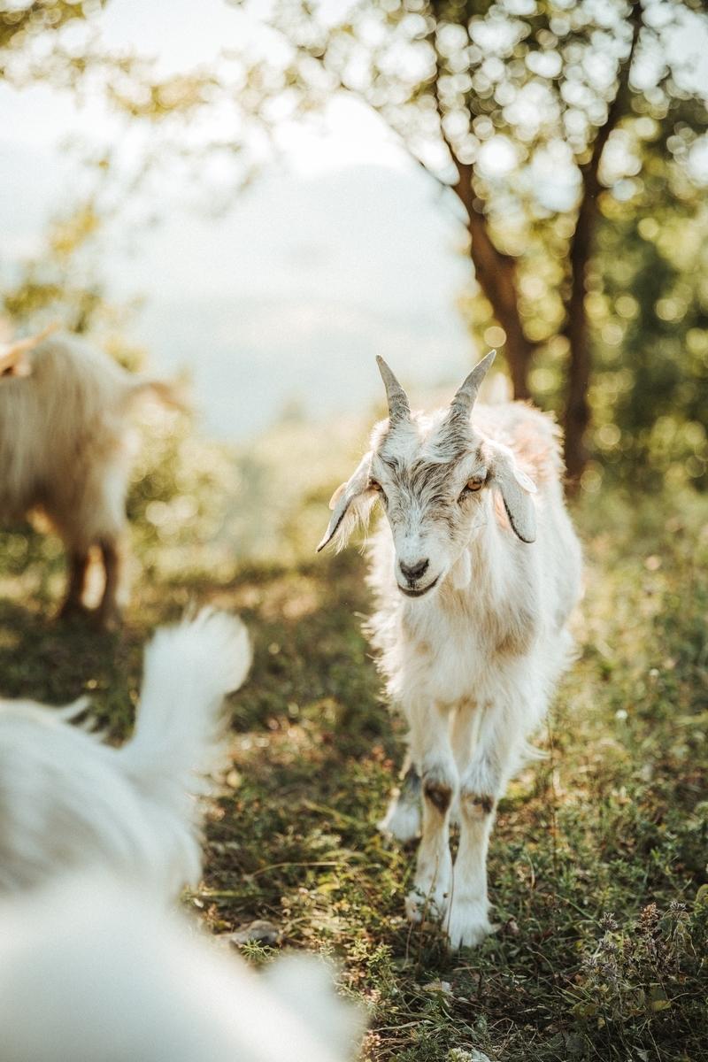 f:id:happy-alpaca:20200324074012j:plain
