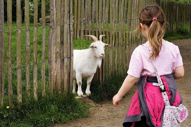 f:id:happy-alpaca:20200324074241j:plain