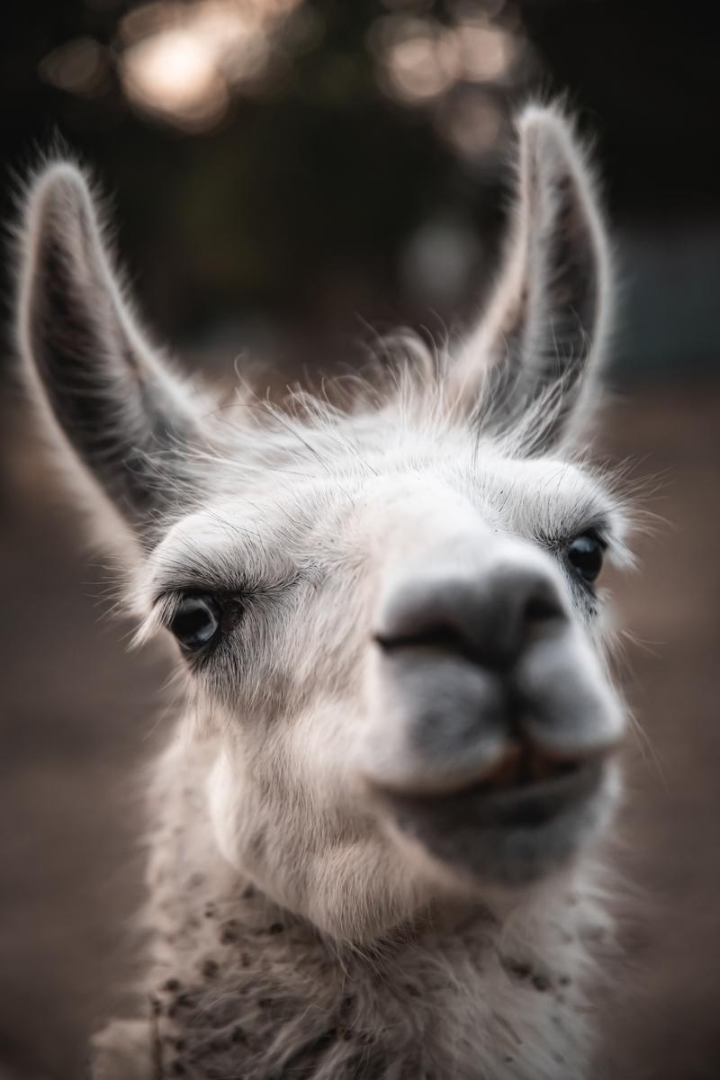 f:id:happy-alpaca:20201116081600j:plain