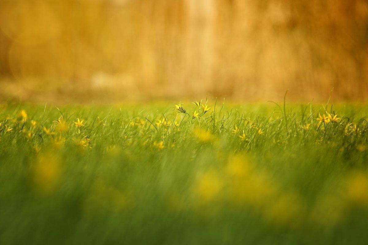 f:id:happy-alpaca:20210126084629j:plain