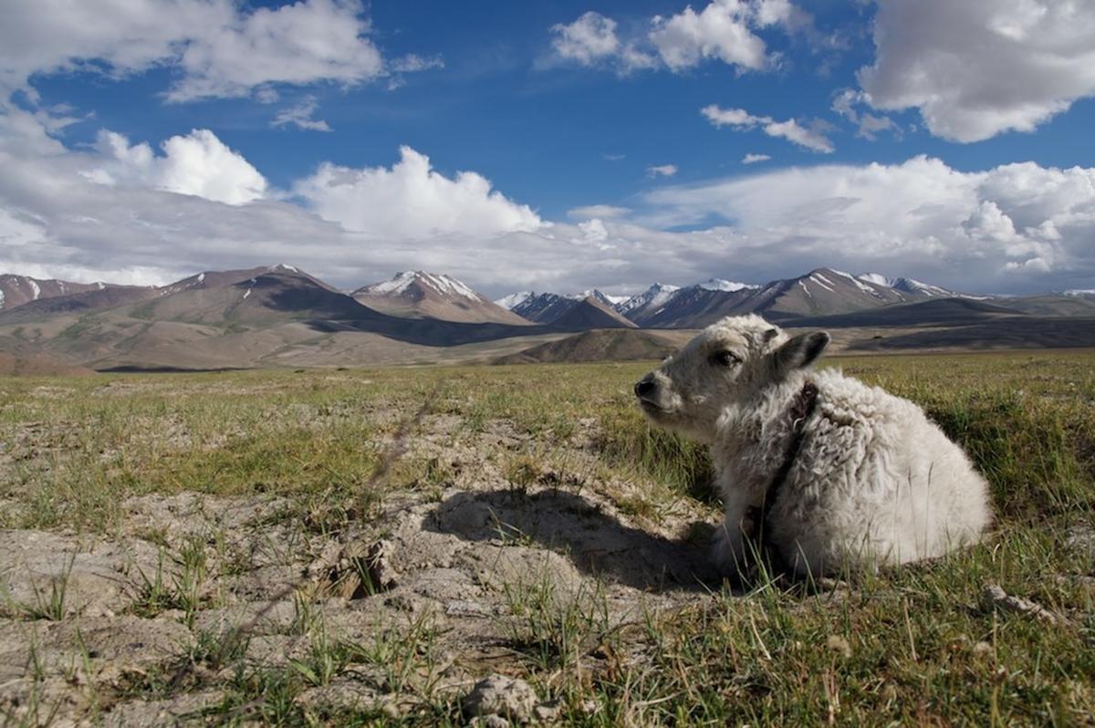 f:id:happy-alpaca:20210903065340j:plain