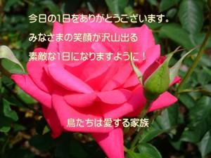 f:id:happy-ok3:20150517124957j:plain