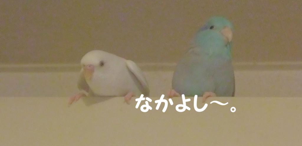 f:id:happy-ok3:20161012182613j:plain