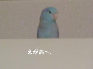 f:id:happy-ok3:20180311204108j:image:w360