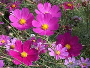 f:id:happy-rose:20091012233141j:image