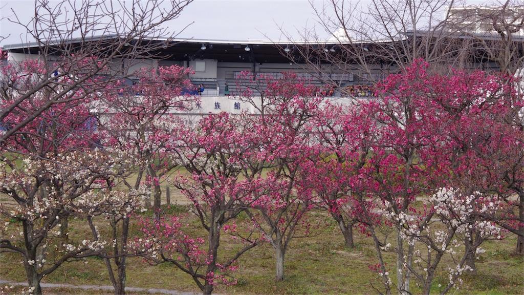 f:id:happy-shin-kyoto:20170228064719j:image
