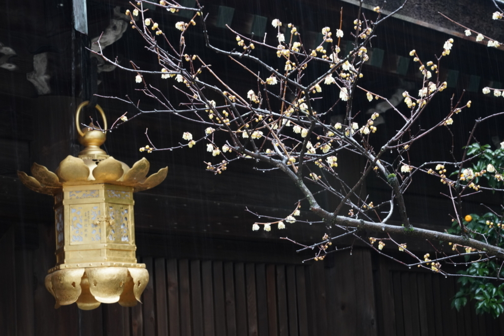 f:id:happy-shin-kyoto:20180211075545j:plain