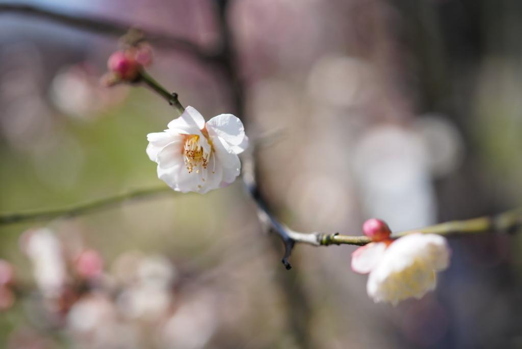 f:id:happy-shin-kyoto:20180311205115j:plain