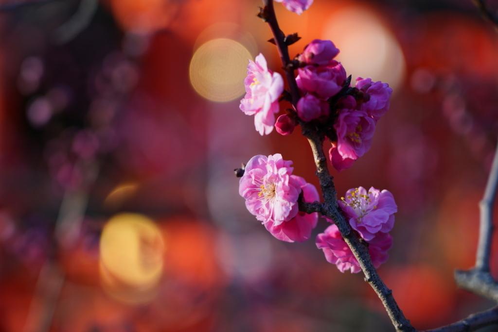 f:id:happy-shin-kyoto:20180311212236j:plain