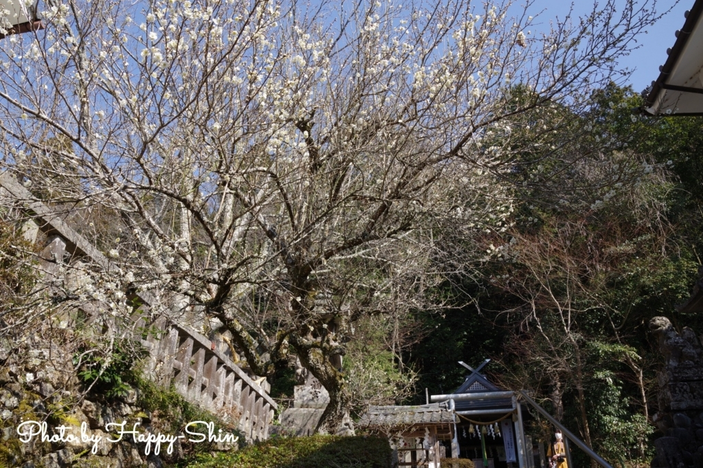 f:id:happy-shin-kyoto:20180314190555j:plain