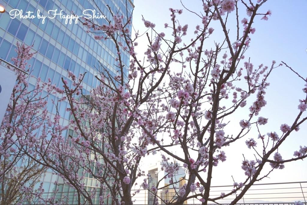 f:id:happy-shin-kyoto:20180318215715j:plain