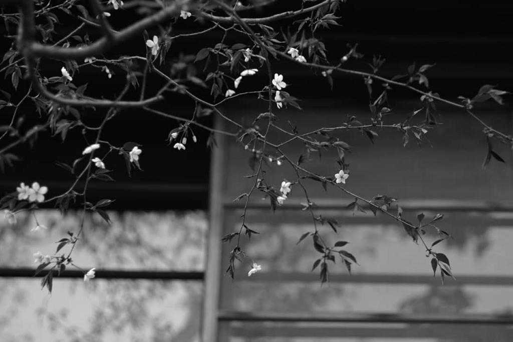 f:id:happy-shin-kyoto:20180328202920j:plain