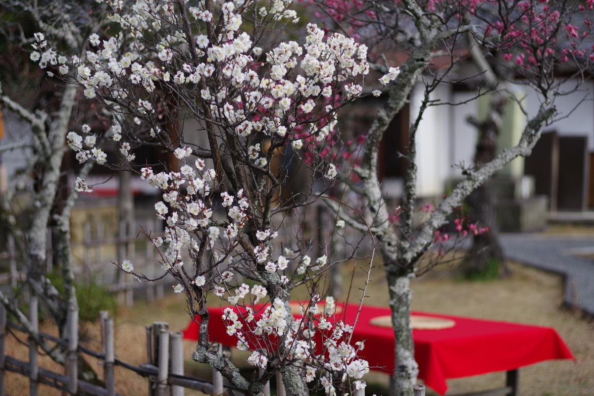 f:id:happy-shin-kyoto:20200203220413j:plain