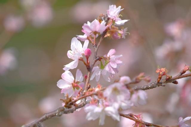 f:id:happy-shin-kyoto:20200222120536j:image