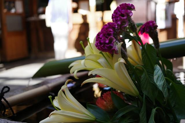 f:id:happy-shin-kyoto:20210725232449j:image
