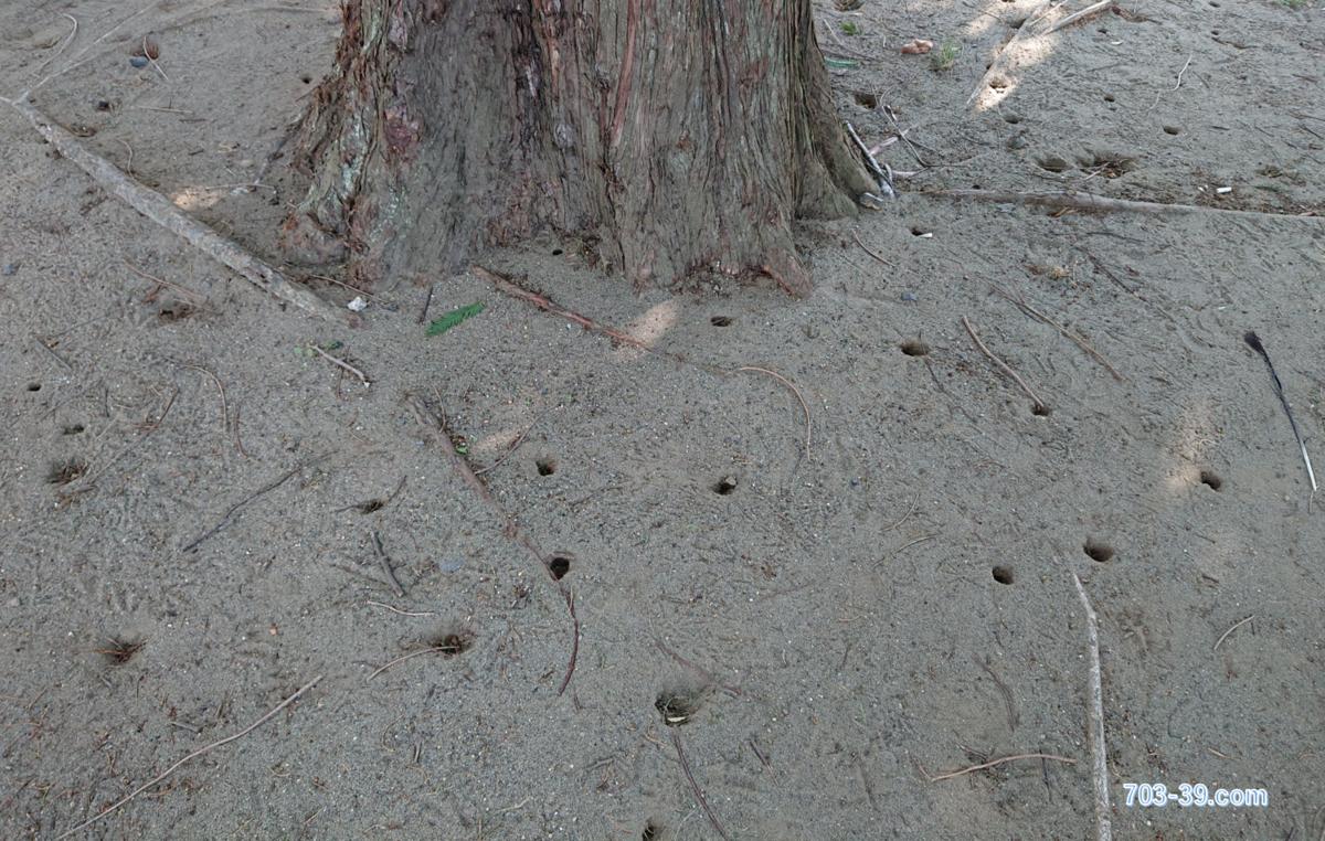 木の下の穴