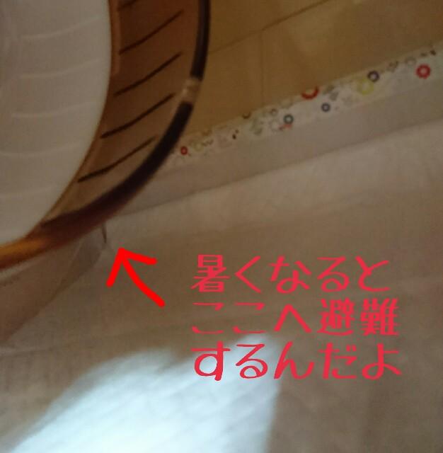f:id:happyanjel-226:20171019222136j:plain