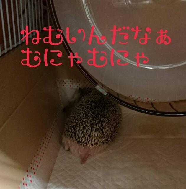 f:id:happyanjel-226:20171109214600j:plain