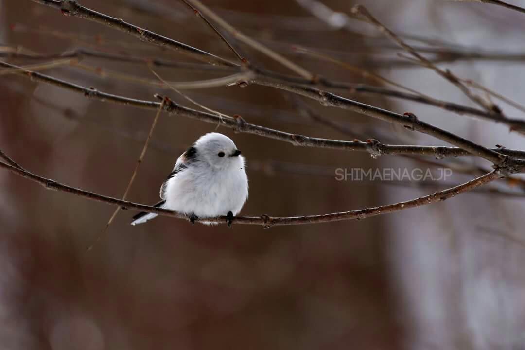 f:id:happybird2525:20170124211842j:image