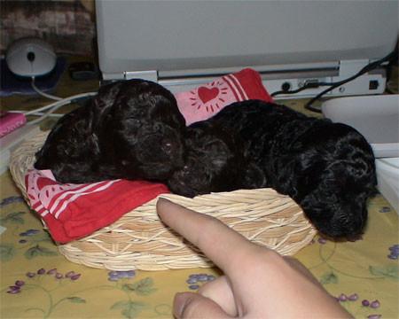 f:id:happybirth:20061203005214j:image