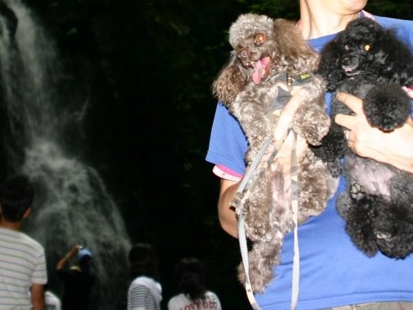 f:id:happybirth:20100815122733j:image