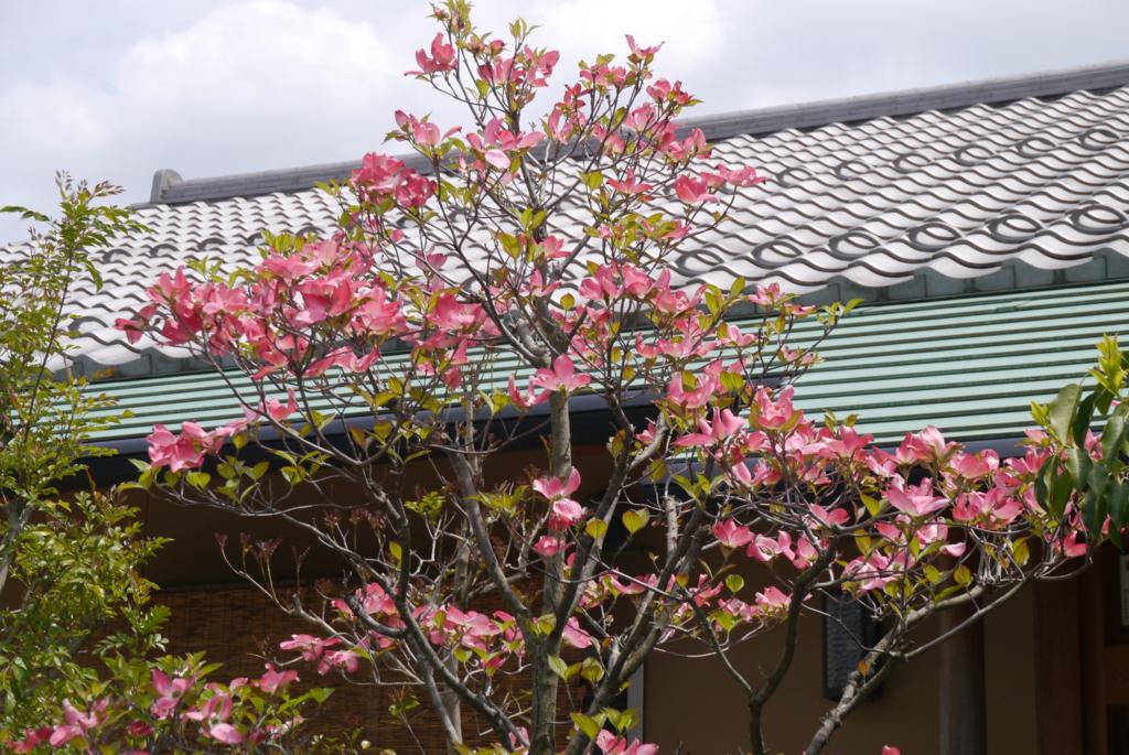 f:id:happyflowertrees:20170504122411j:plain