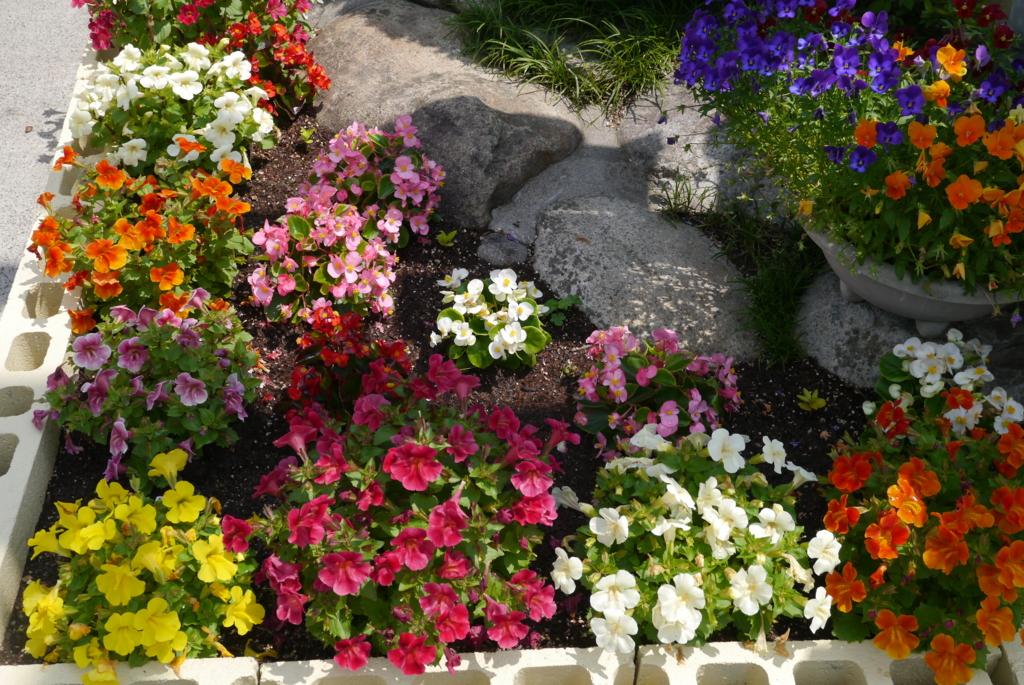 f:id:happyflowertrees:20170528141012j:plain