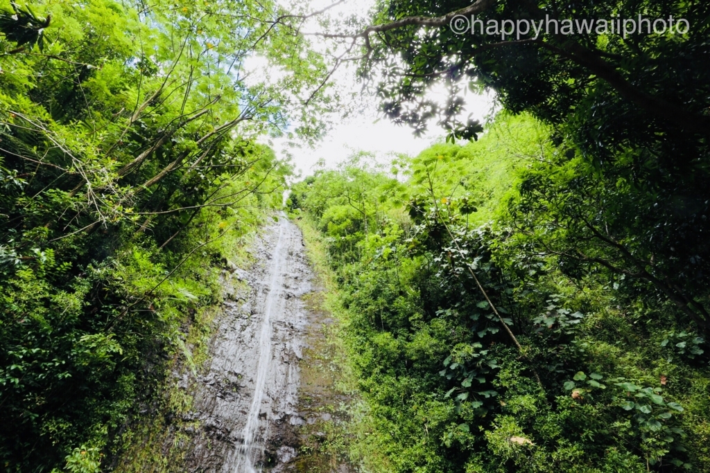 f:id:happyhawaiiphoto:20171001222600j:plain