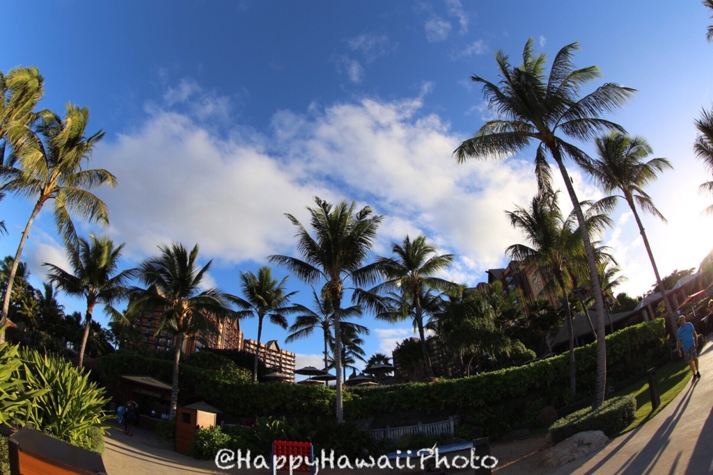 f:id:happyhawaiiphoto:20180206234504j:plain