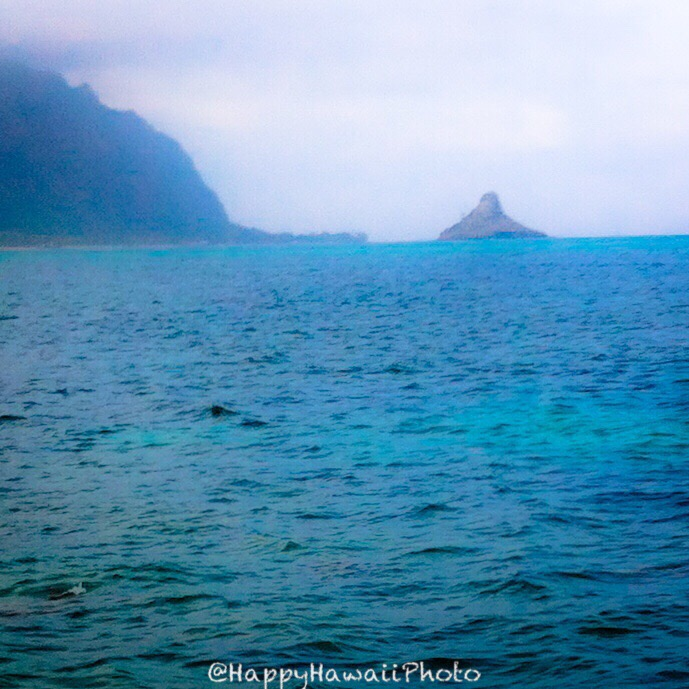 f:id:happyhawaiiphoto:20180224211908j:plain