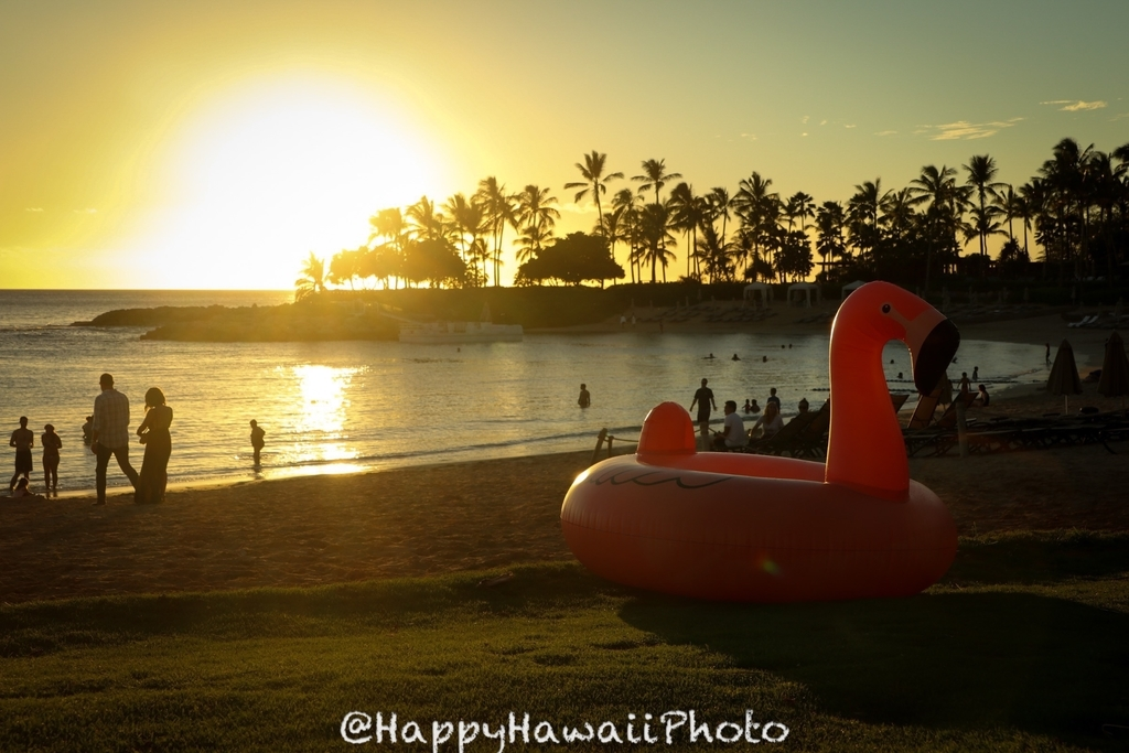 f:id:happyhawaiiphoto:20181111223253j:plain
