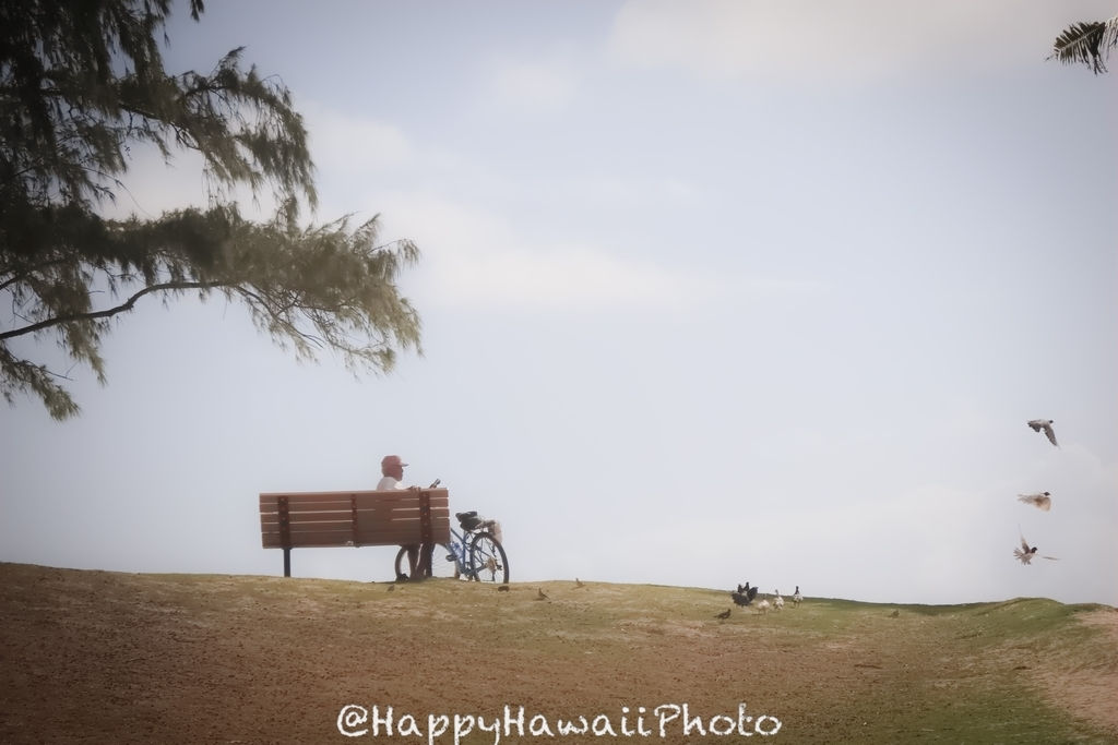 f:id:happyhawaiiphoto:20181208000944j:plain