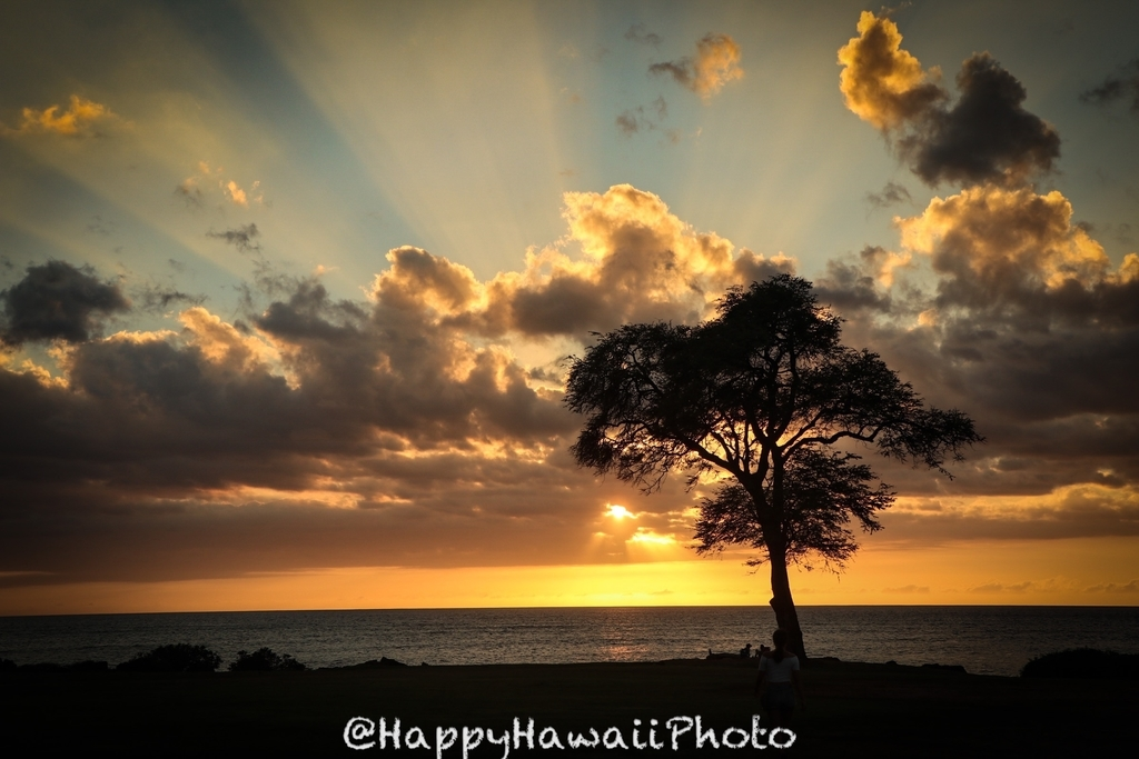 f:id:happyhawaiiphoto:20181222210653j:plain
