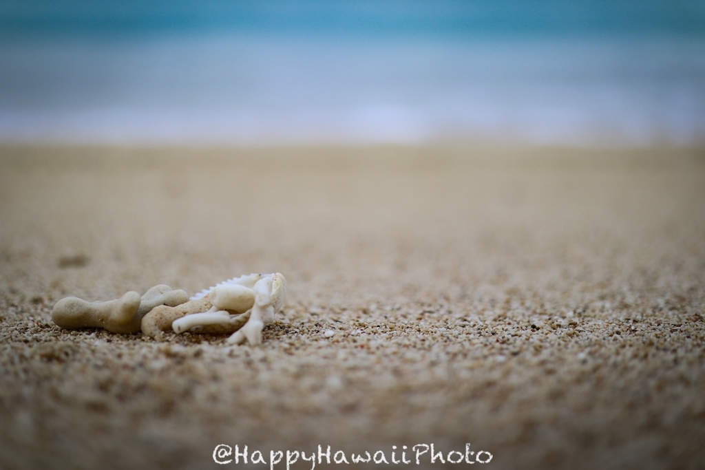 f:id:happyhawaiiphoto:20190224202501j:plain