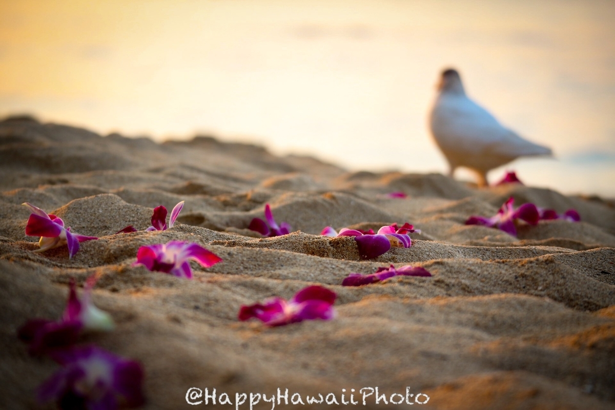 f:id:happyhawaiiphoto:20190328225930j:plain