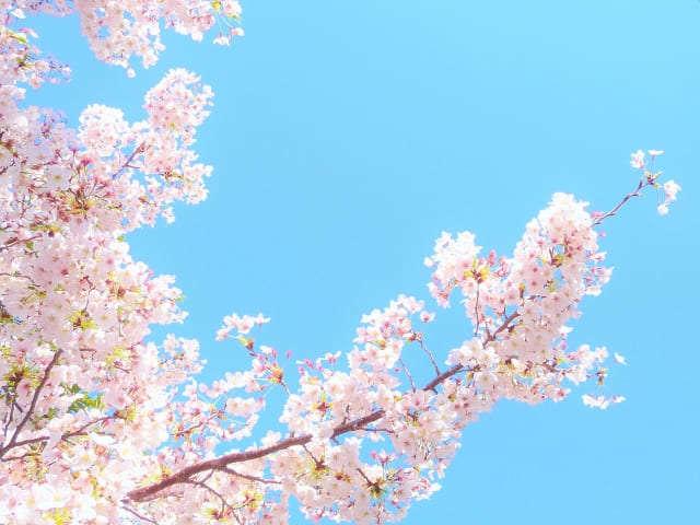 f:id:happykonkatsu:20200415123321j:plain