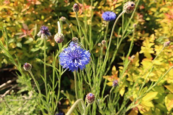 神戸布引ハーブ園 花