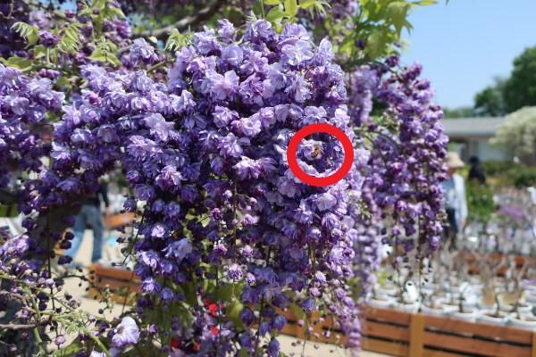 赤い丸で囲った「蜂」を消します。