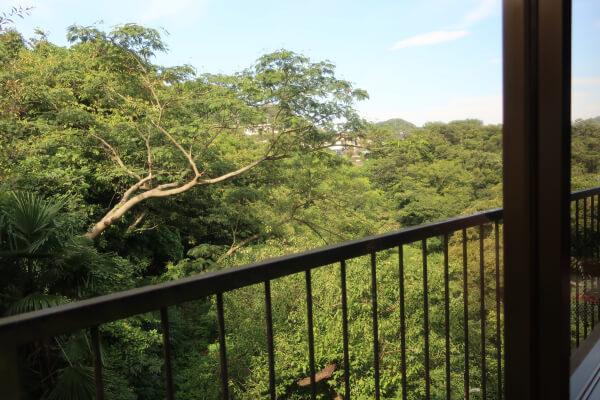 窓から見える緑一杯の涼し気な景色♪(葉山「日の出園」)