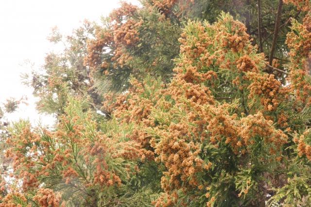 花粉が舞う季節がやってきました。花粉症ってどんな病気なの?
