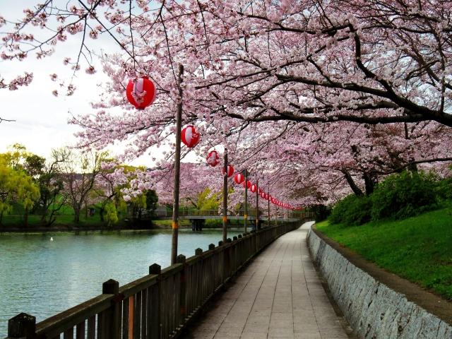 なぜお花見は桜なの? なぜ街の中に桜の名所があるの?お花見の由来と桜のなぜを解説します!