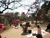 「桜」「桃」「梅」似ているようで別物!「桜」「桃」「梅」の特徴と見分け方!