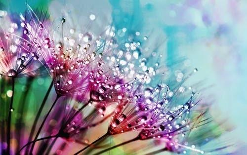 キラキラした雫が美しい花